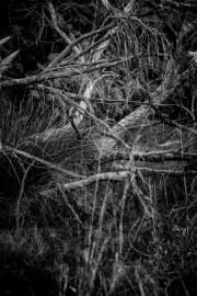 Chaos de végétation
